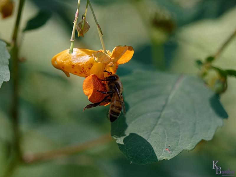 DSC_9714 hunting for nectar_DxO