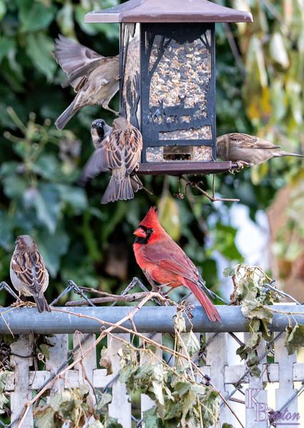 DSC_5631 backyard bird feeders