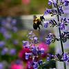 DSC_0639 busy bee_DxO