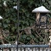 DSC_9842 backyard bird feeders