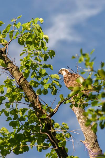 DSC_9218 birds eye view