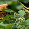 DSC_1200 scenes from Butterfly Gardens