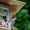 DSC_3256 backyard bird feeder