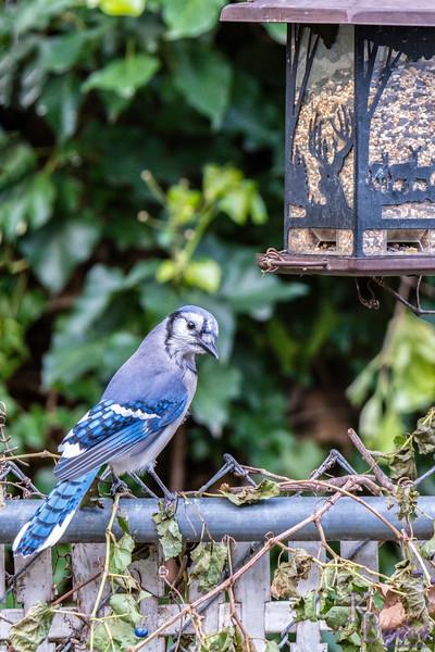 DSC_5331 backyard bird feeders