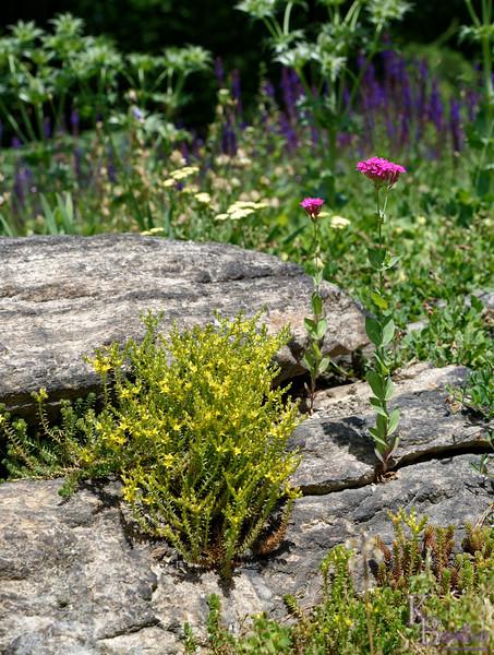 DSC_5132 scenes friom the rock gardens_DxO