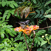 DSC_3357 scenes from Butterfly Gardens