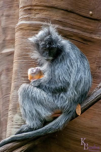 DSC_1673 rock a by baby on a tree top