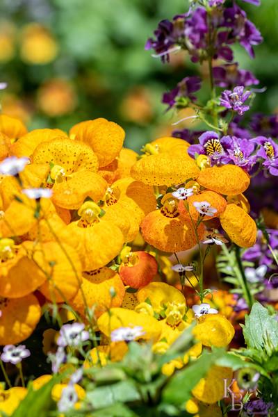 DSC_1304 greenhouse floweres of Wavehill