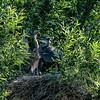 DSC_9894 heron's nest