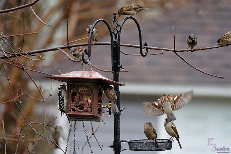 DSC_1781 backyard visitors_DxO