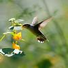 DSC_9616  the hummingbirds of Clove Lakes_DxO