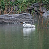 DSC_9151 hunting in the rain