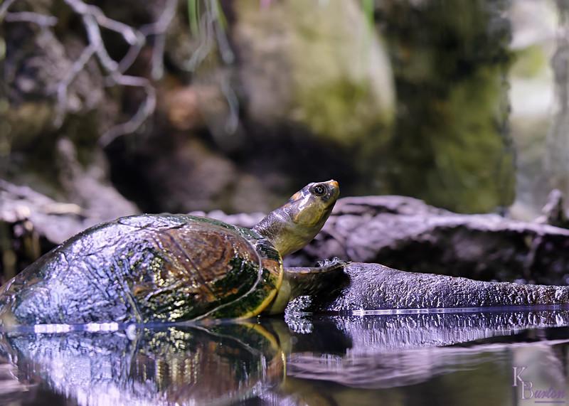 DSC_0691 scenes from the Reptile house_Nik_DxO