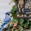 DSC_5364 backyard bird feeders