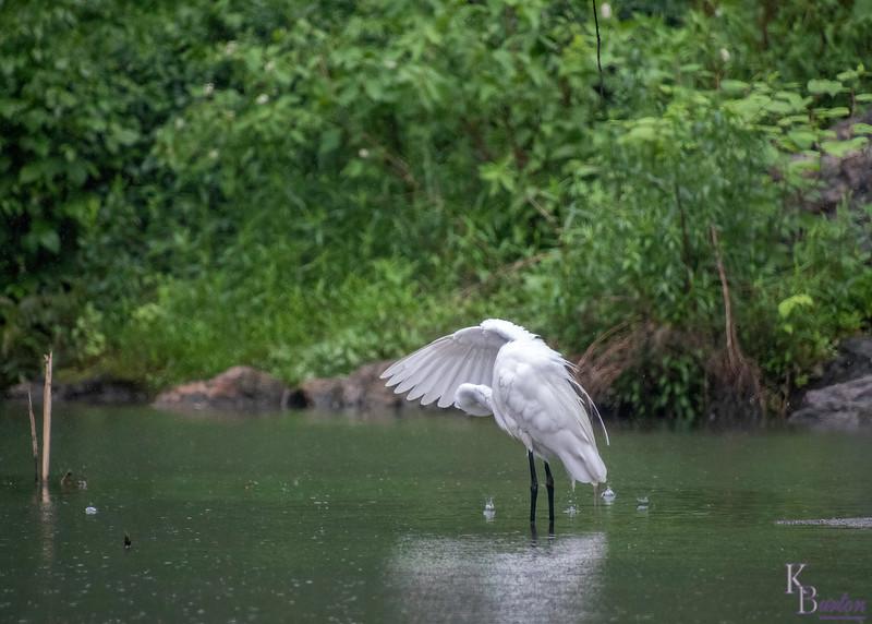 DSC_9291 rainy day at the pond (TS)