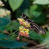 DSC_7362 scenes from Butterfly Gardens