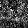 DSC_0870 heron's nest