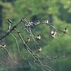 DSC_7347 birds of a feather_DxO