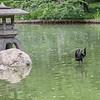 DSC_1432 Japanese Gardens