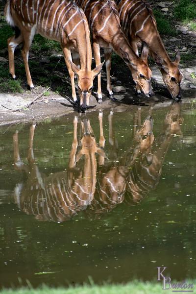 DSC_0443 reflections