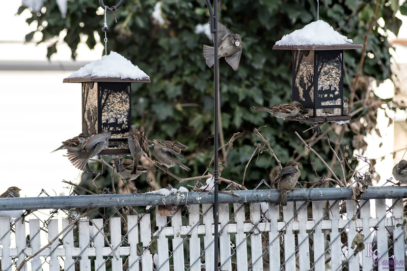 DSC_9851 backyard bird feeders