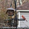 DSC_6396 backyard bird feeders