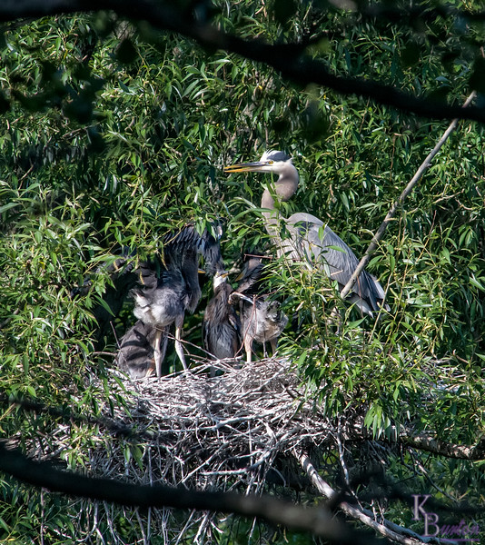 DSC_9069 clear shot of nest