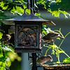 DSC_4160 backyard bird feeder