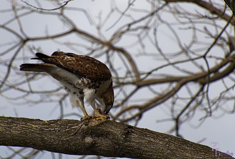 DSC_8592 the falcon_DxO