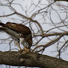 DSC_8592 the falcon_DxO