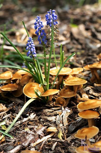 dsc_ 2766 mushroom bed