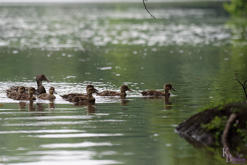 DSC_9540  rainy day at Clove Lakes_DxO