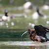 DSC_0749 scarlet ibis_DxO