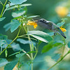 DSC_9753  the hummingbirds of Clove Lakes_DxO