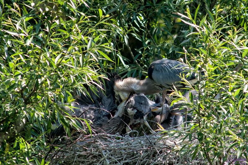 DSC_8993 heron's nest