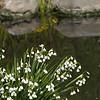 Snowflake flowers