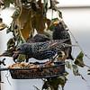 DSC_5686 backyard bird feeders