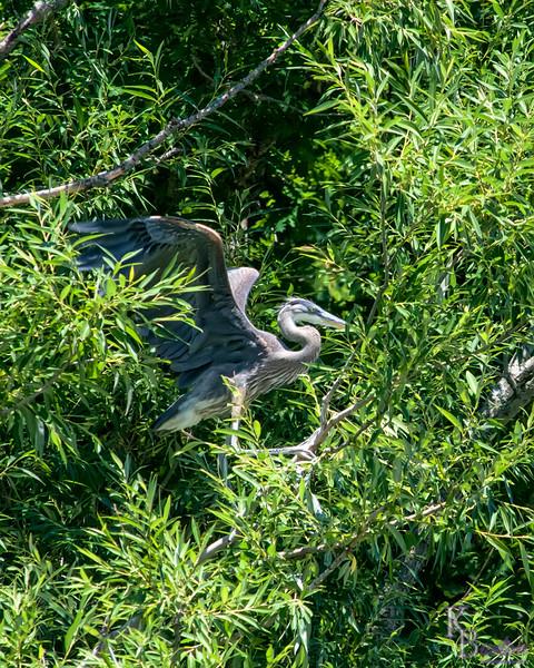 DSC_0063 heron's nest