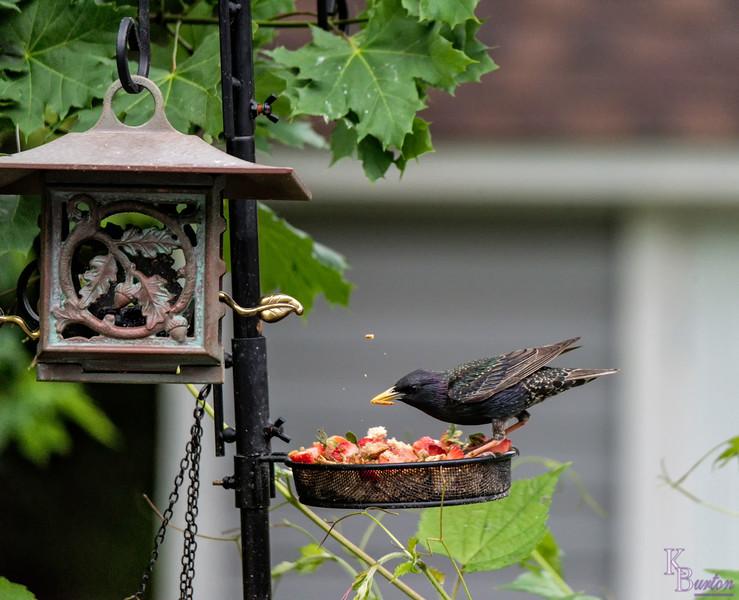DSC_4094 backyard bird feeder