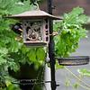 DSC_4049 backyard bird feeder