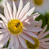 DSC_9433 hover fly