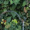DSC_5649 scenes from my backyard