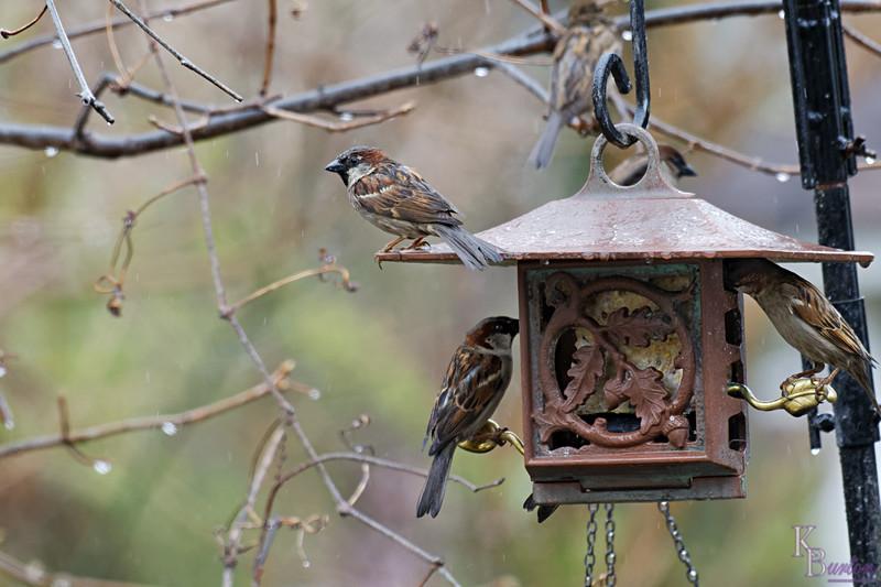 DSC_6307 backyard visitors_DxO