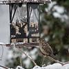 DSC_4581 winter scenes from my backyard