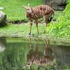 DSC_8087 antelope