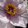 DSC_2541 honey bee