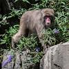 DSC_2809 Snow monkey