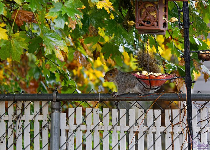 DSC_9359 backyard visitor_DxO