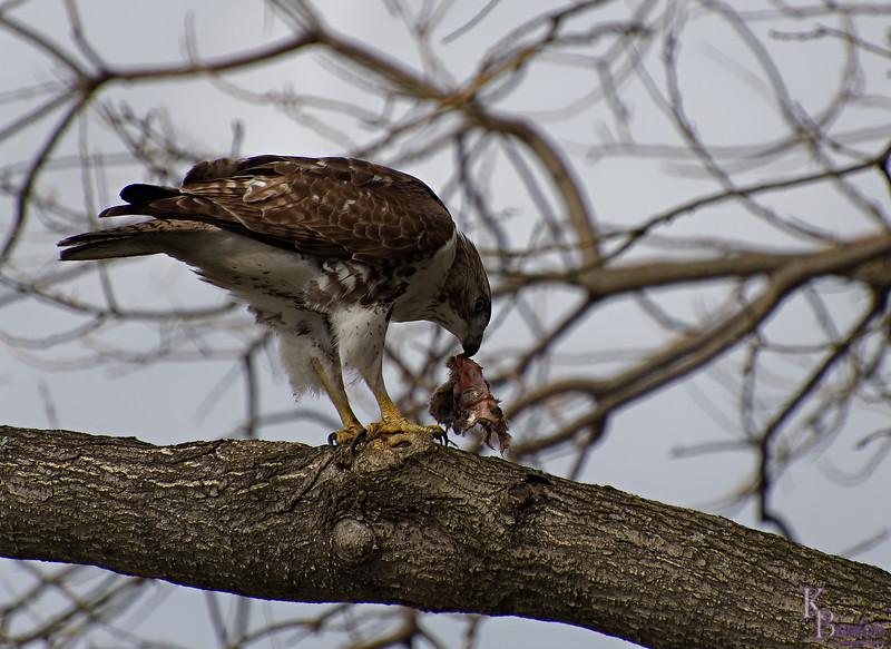 DSC_8617 the falcon_DxO