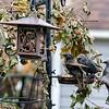 DSC_5739 backyard bird feeders